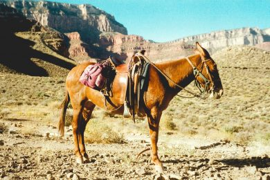 Horseback Riding in Sedona